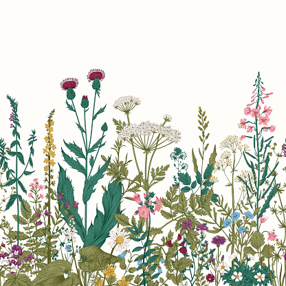 Vector seamless floral border. Herbs and wild flowers.